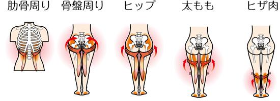 肋骨からひざ肉までサポート