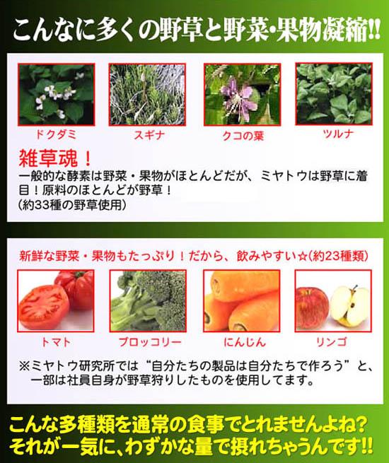 多くの野草と野菜、果物が凝縮