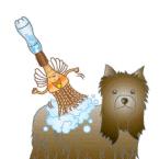 小型犬のシャンプー